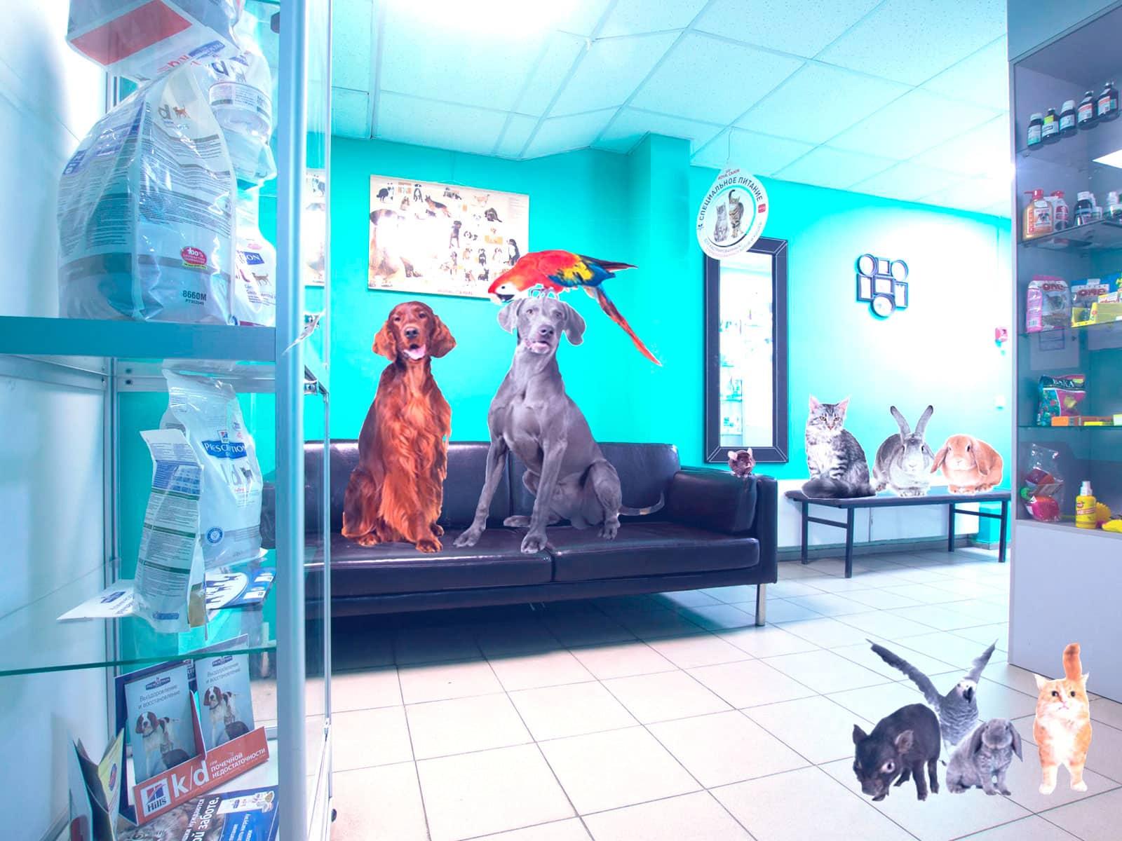 Онлайн-кассы для ветеринарных клиник